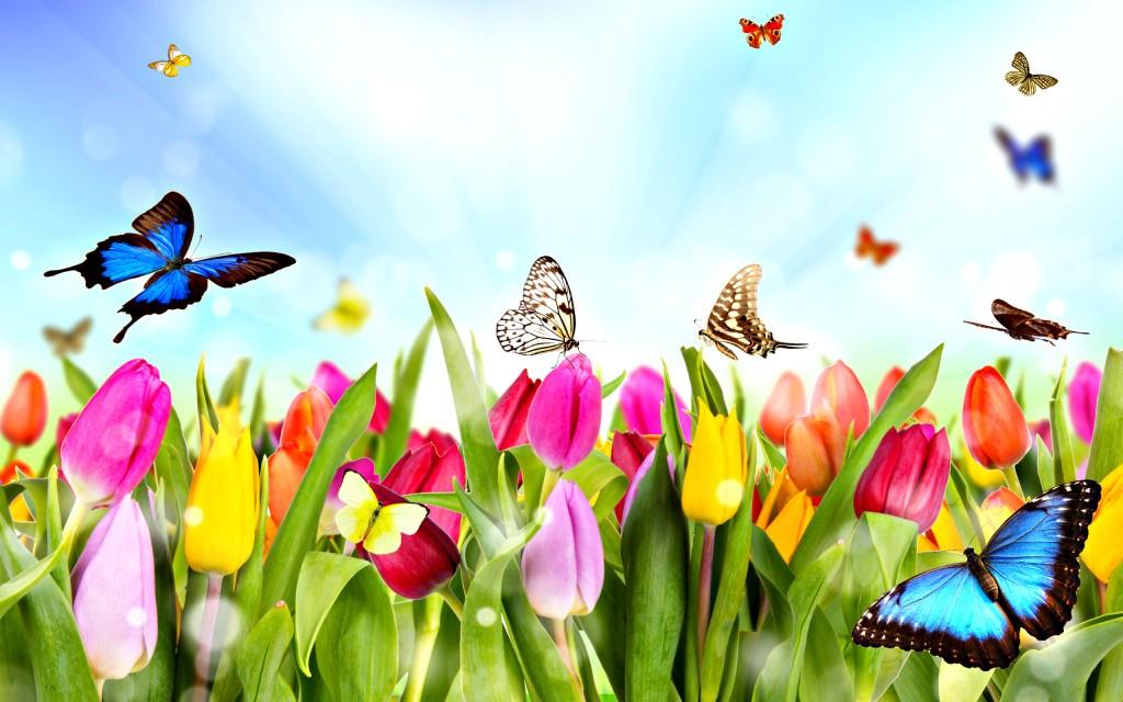 spring-01